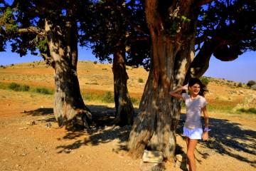 Hermel juniperus