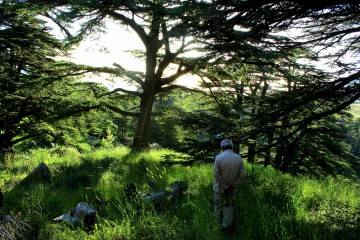 cedars forest bcharre
