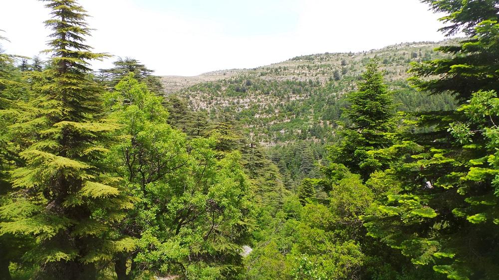 ehden nature reserve
